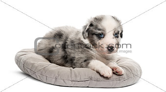Crossbreed puppy lying down in a crib isolated on white