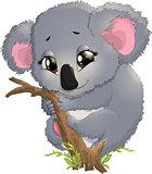 pretty funny koala