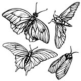 Monochrome, black and white seamless background with butterflies. Elegant elements for design, can be used  wallpaper, decoration  bags  clothes. Hand drawn contour lines  strokes.