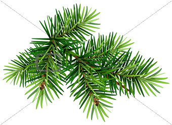 Green Christmas pine tree branch