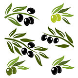 Green and black olives set logo
