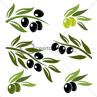 Green and black olives set logo
