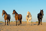 four horses on the beach