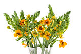 Beautiful bouquet ornithogalum