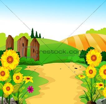 beauty landscape for your design
