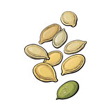 Whole and peeled pumpkin seeds isolated on white background