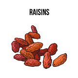 Pile of dried raisins, sketch style, hand drawn vector illustration