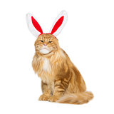 Big ginger cat in christmas rabbit ears head rim