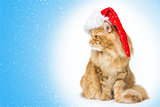 Big ginger cat in santa cap looking the side