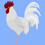 white rooster vector illustration in Color