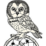 Owl with Dream Catcher