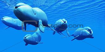Bowhead Whale Pod
