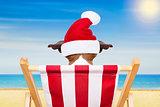 dog beach chair on christmas holidays