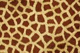 Fur Animal Textures, Girafe