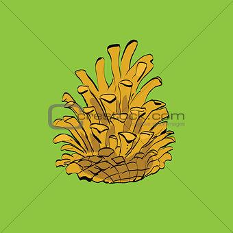 Christmas-tree pine cone