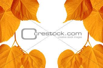 Autumn sunlight leaves