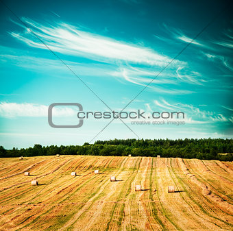 Beautiful Summer Field Scenery with Haystack