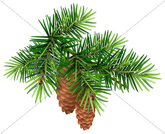 Green fir branch and two cone