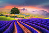 lavender field beauty fine art
