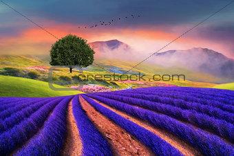 lavender field beauty fine art
