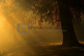 beautiful Autumn day on hampstead heath London Uk
