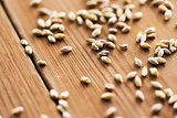 close up of malt or cereal grains