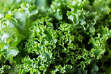 close up of green salad lettuce