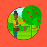 Farmer collecting apples vector illustration.