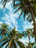 Palm trees and sky.