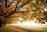 Autumn Fall in morning light