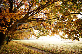 Autumn Fall in morning light