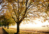 Autumn trees with glorious sunrise
