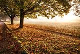 Amazing autumn leaves fallen at sunrise