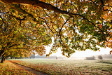 Autumn scene with overhanging trees