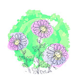 daisy flowers, floral vector set of ink drawing plants, monochrome black line drawn elements