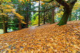 Garden Path Covered in Autumn Leaves