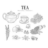 Natural Ingredients And Tea Isolated Hand Drawn Realistic Sketches