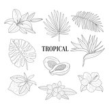 Tropical Fruits And Plants Assortment Hand Drawn Realistic Sketch