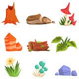 Forest Landscape Natural Elements, Plants And Mushrooms