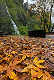 Fall Foliage at Horsetail Falls
