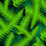 Fern frond silhouettes seamless pattern. Vector illustration