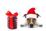 christmas santa dog