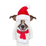 christmas santa dogs