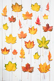collection of colorful maple leafs
