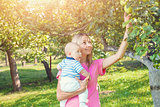 Mother with baby picking apples from an apple tree