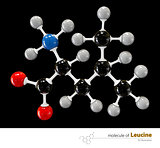 Illustration of Leucine Molecule isolated black background