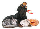 pet and pumpkin of halloween