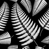 Sprig of white fern on a black background.