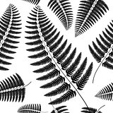 Sprig of black fern on a white background.