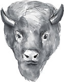 American Bison Head Watercolor